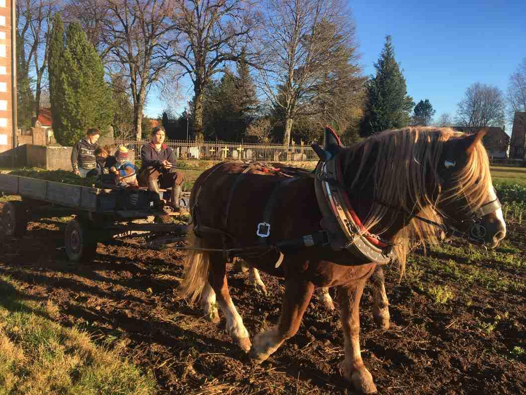 Ernten und Essen Pferde